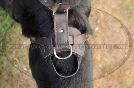 'New Venice' Agitation/Protection Leather Dog Harness for German Shepherd