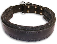 Alsatian Dog Padded Black collar 21'' /21 inch dog collar-C24