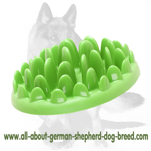 Attractive grassy dog plate for healthier food concumption