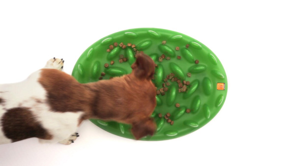 Great green grass dog plate for slow eating
