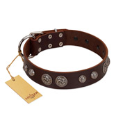 """Choco Brownie"" FDT Artisan Brown Leather German Shepherd Collar Adorned with Silver-Like Conchos"
