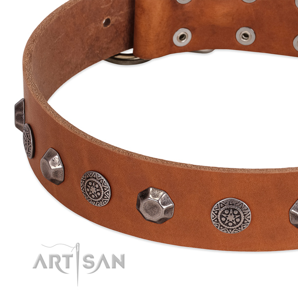 Impressive full grain leather collar for your canine stylish walking