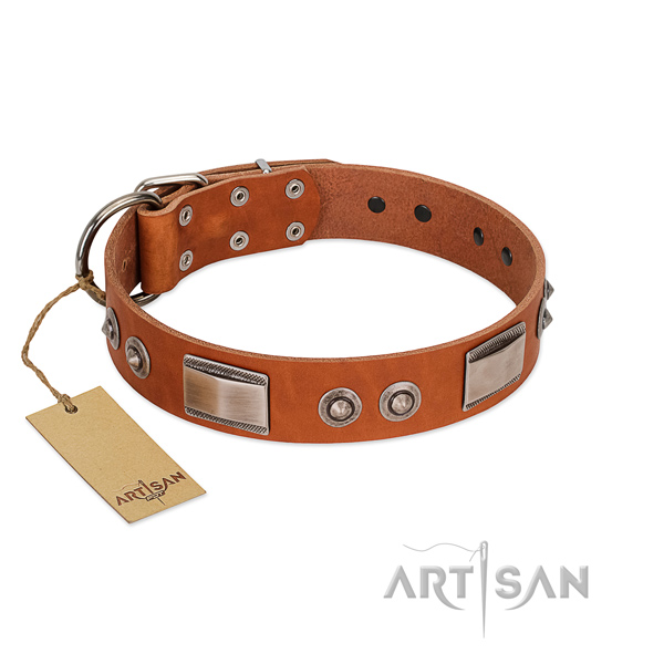 Incredible leather collar with decorations for your canine