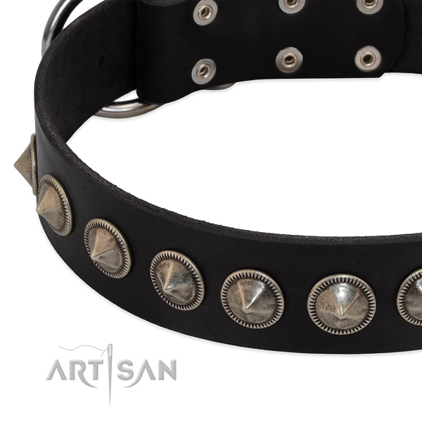 Everyday walking studded full grain leather collar for your canine