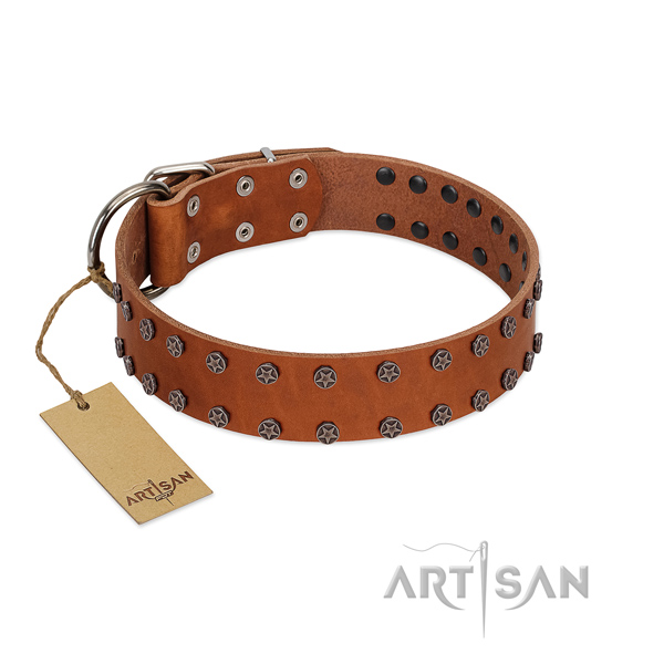 Everyday walking natural leather dog collar with stylish embellishments