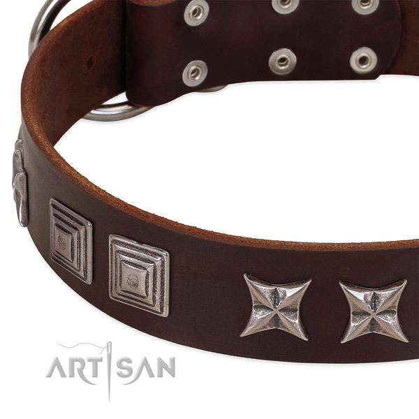 Stylish walking full grain natural leather dog collar with trendy adornments