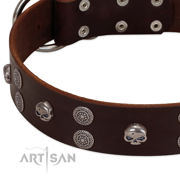 Top notch full grain leather dog collar with impressive studs