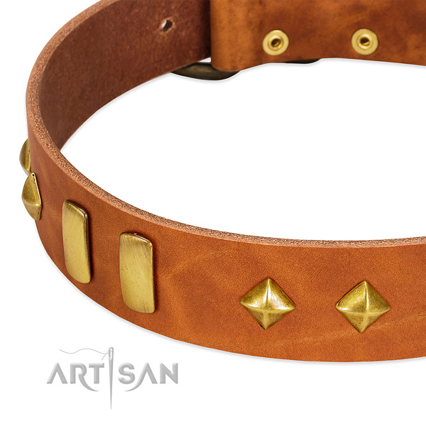 Stylish walking full grain genuine leather dog collar with stylish design adornments