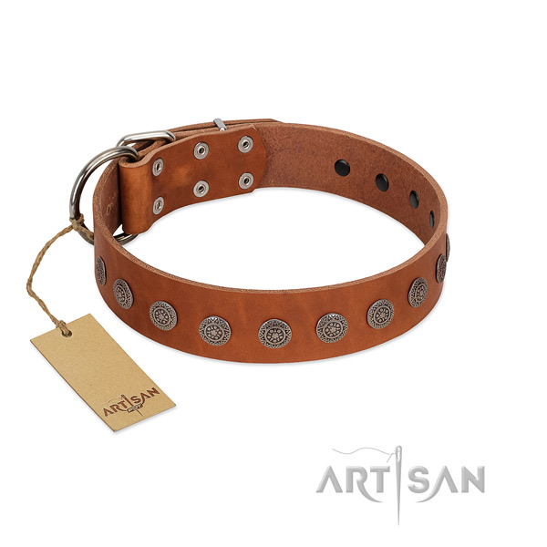 Stunning decorations on full grain leather collar for everyday use your canine