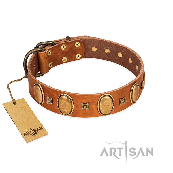 Full grain leather dog collar with remarkable studs for daily walking