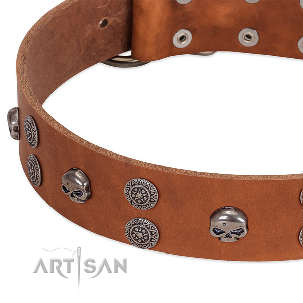 Quality full grain genuine leather dog collar with exceptional studs