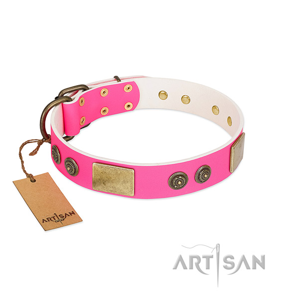 Extraordinary leather dog collar for stylish walking