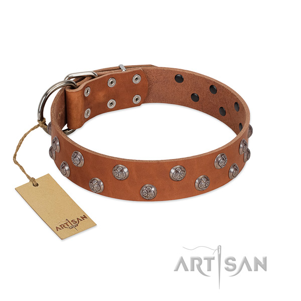 Reliable natural leather dog collar with studs