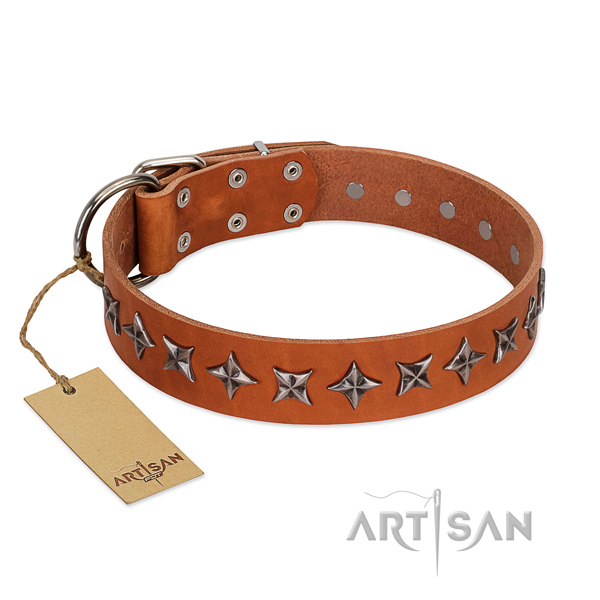 Everyday walking dog collar of top quality natural leather with embellishments