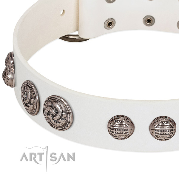 Strong fittings on leather collar for daily walking your four-legged friend