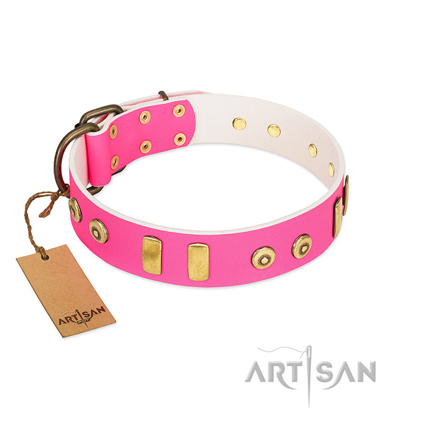 Full grain leather dog collar with trendy adornments for everyday walking