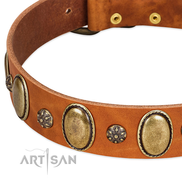Daily use top rate full grain genuine leather dog collar