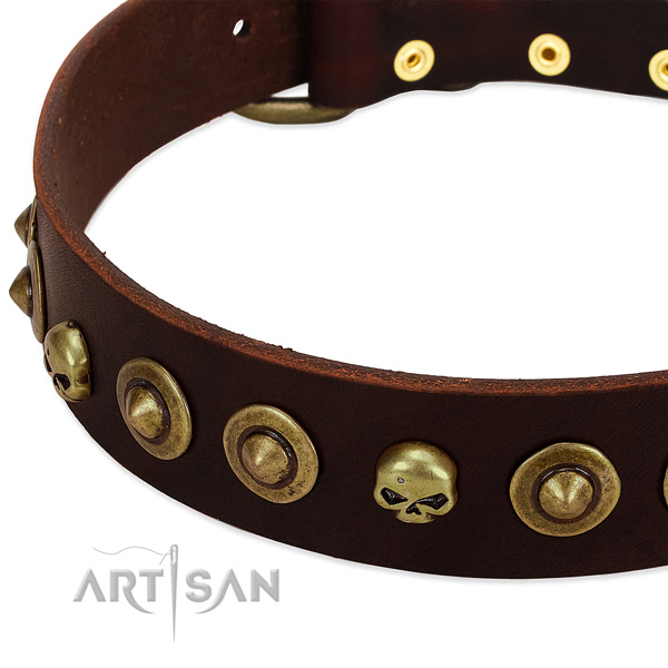 Unusual studs on full grain leather collar for your four-legged friend