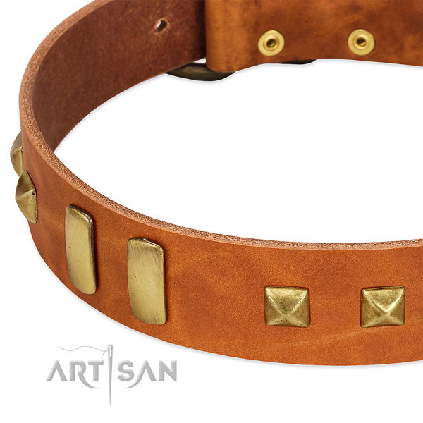 Top notch natural leather dog collar with adornments for daily use