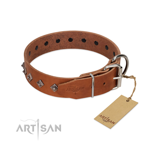 Leather dog collar with stunning studs for your canine
