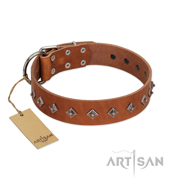 Natural leather dog collar with extraordinary embellishments created four-legged friend