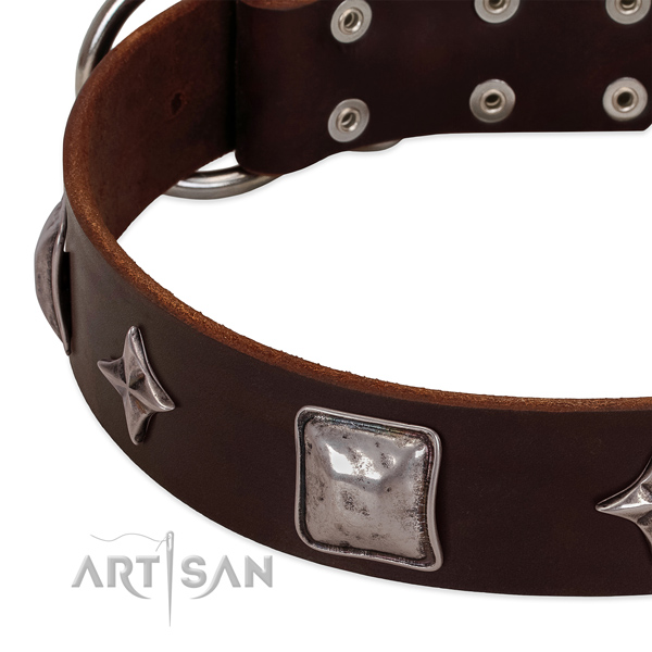 Daily walking full grain leather dog collar with amazing adornments