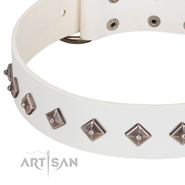 Stylish design collar of leather for your four-legged friend