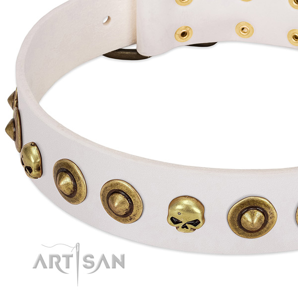 Fashionable embellishments on leather collar for your four-legged friend