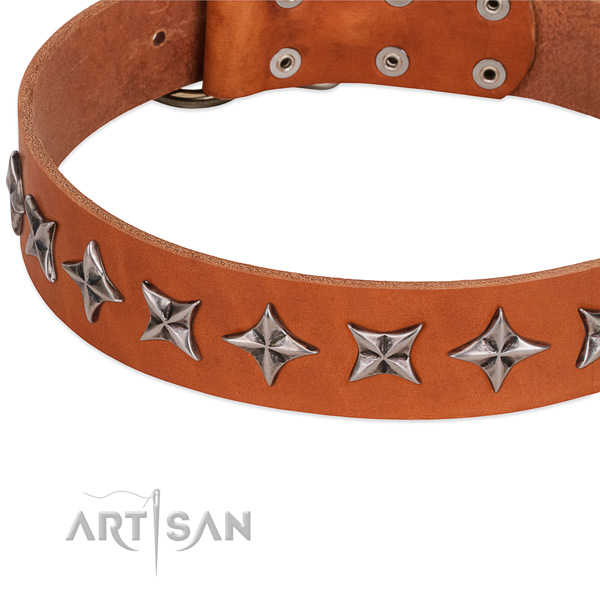 Everyday use studded dog collar of best quality full grain natural leather