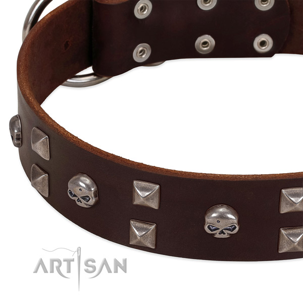 Top notch full grain leather dog collar created for your four-legged friend