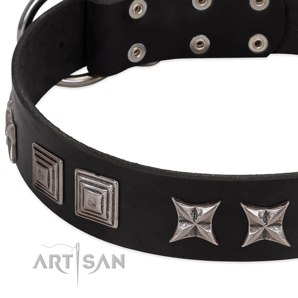 Daily use full grain leather dog collar with stylish adornments