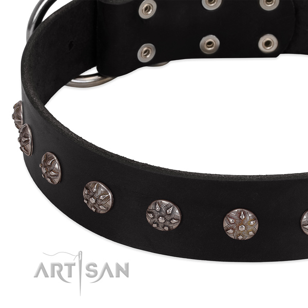 Top notch genuine leather dog collar with exceptional studs
