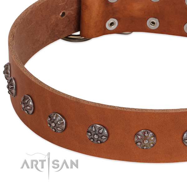 Quality full grain leather dog collar with embellishments for your four-legged friend