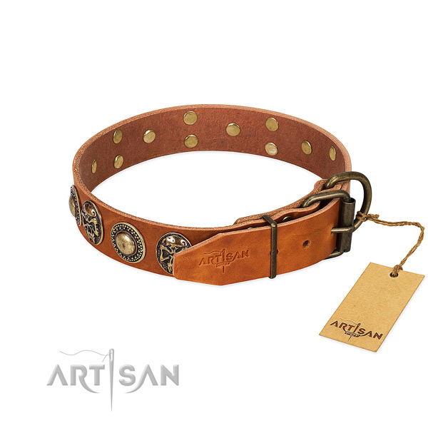 Rust-proof buckle on basic training dog collar