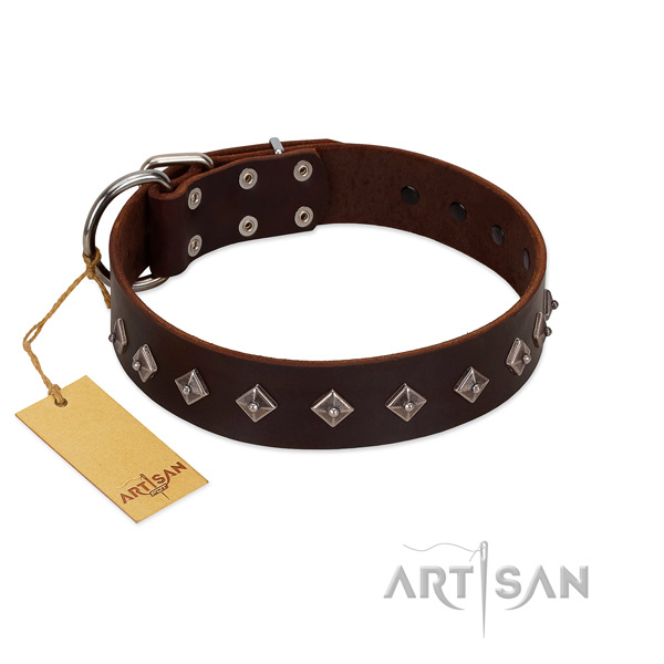 Stylish adornments on natural leather collar for daily walking your pet