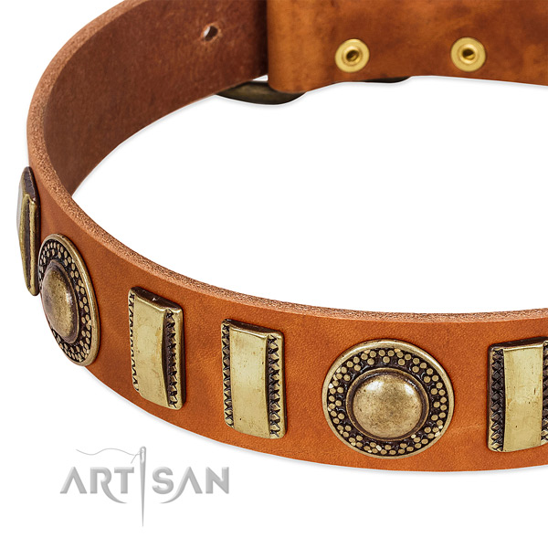 Reliable leather dog collar with strong traditional buckle