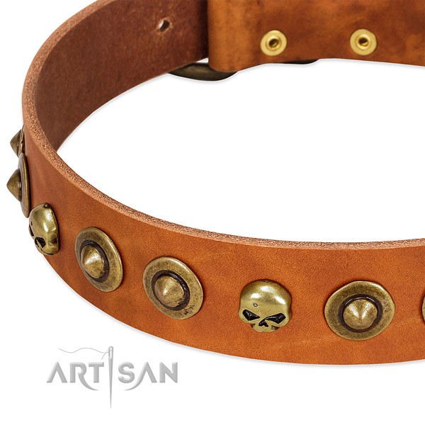 Stylish design decorations on leather collar for your four-legged friend
