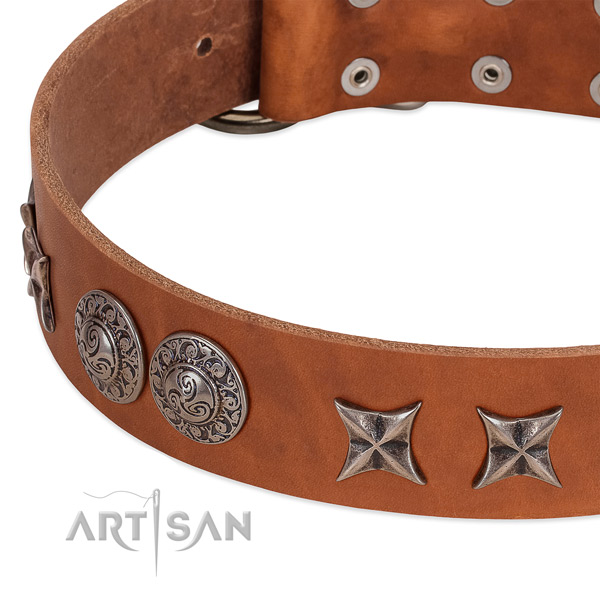 Incredible full grain natural leather dog collar with rust-proof fittings