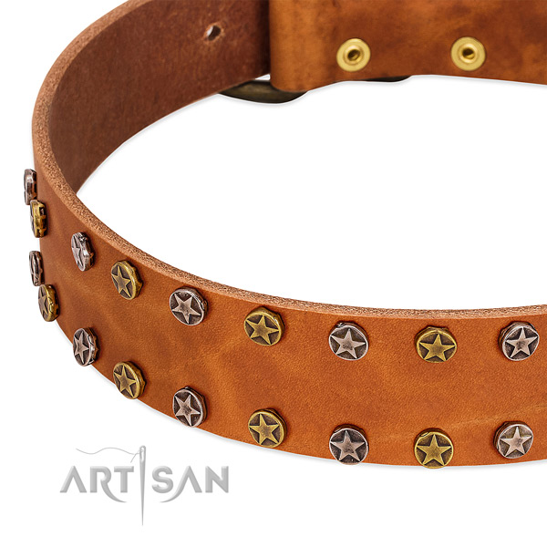 Fancy walking full grain natural leather dog collar with designer decorations