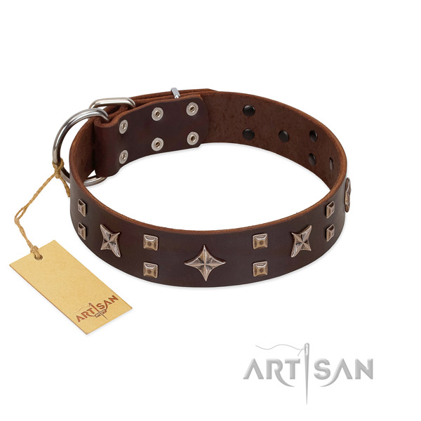 Daily walking full grain leather dog collar with exceptional adornments