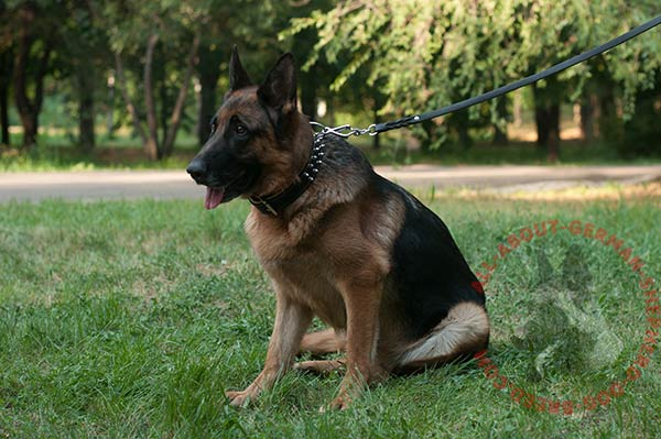 Leather canine collar for German Shepherd with spikes