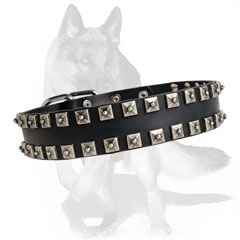 Decorated leather dog collar with square studs