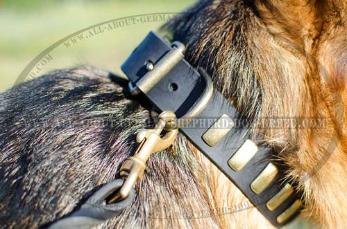Chic leather dog collar exclusively decorated