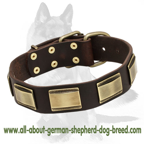 Handmade leather dog collar with brass decorations