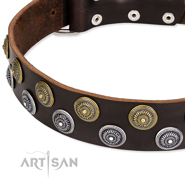 Quick to fasten leather dog collar with resistant to tear and wear chrome  plated buckle and D-ring