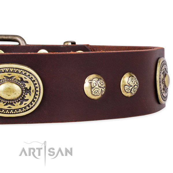 Everyday walking full grain genuine leather collar with rust resistant buckle and D-ring