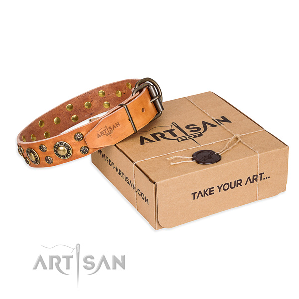 Everyday leather dog collar with remarkable studs