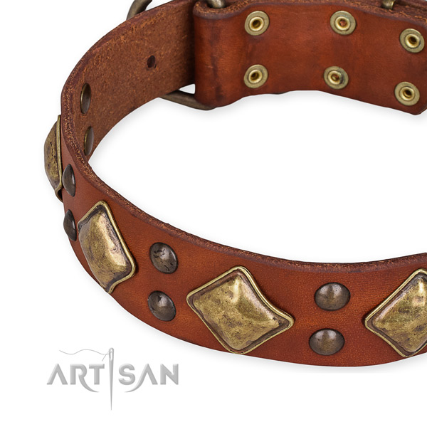 Easy to put on/off leather dog collar with resistant brass plated fittings