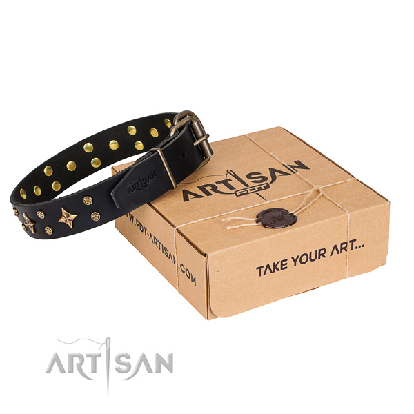 Trendy leather dog collar for stylish walking
