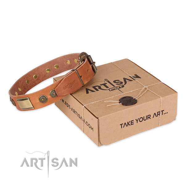 Finest quality full grain leather dog collar for stylish walks